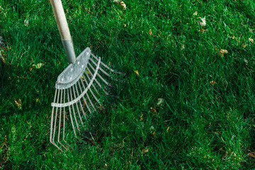 rakes stand on a green lawn