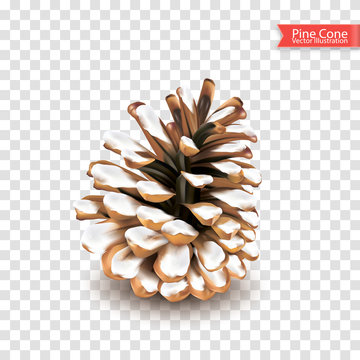 Realistic single dry pine cone with snow isolated on transparent background. Object for design. Vector illustration