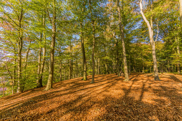 imagen of a beautiful autumn day in the forest with sunlight coming through the trees creating shadows in Spaubeek in South Limburg in the Netherlands Holland