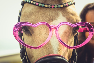 Postcard about love: funny horse with pink glasses hearts. St. Valentine's day, women's day. The concept of friendship, Valentine, horse riding, trust between human and animal.