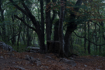 a large green decaying tree in a depressing autumn forest with moss old table and benches, green trees, foliage and large stones