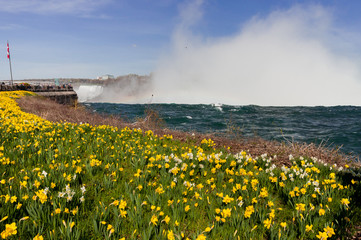 View at Niagara Falls and flowers from Canadian side in spring season