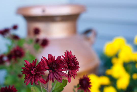 A group of 3 red mums with red mums, yellow mums, and a copper milk jug in the background