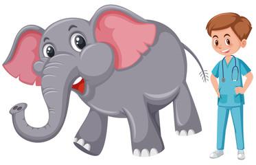 A vet taking care of elepehant