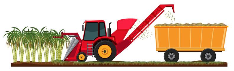 Farm harvesting sugar cane
