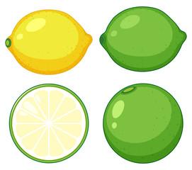 Simple citrus fruit on white backgrouns