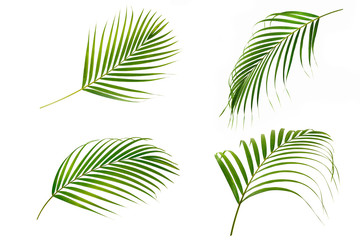 Collection of palms leafs isolated on white background.