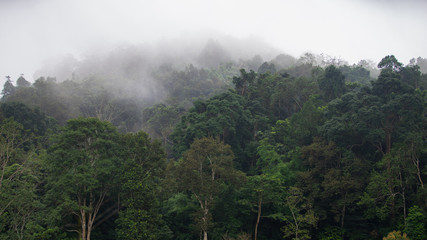 Tropical rainforest with fog in Mae Sot, Tak province, Thailand.