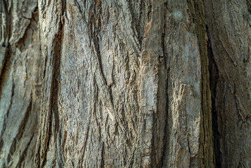 tree bark texture background, wooden texture pattern