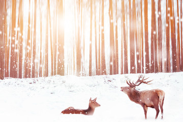 Wall Mural - Family of noble deer in a snowy winter forest. Christmas fantasy image in pink and yellow  color. Winter wonderland.