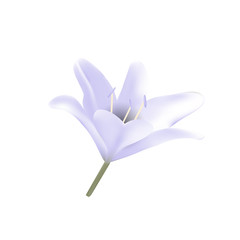 Blue lily. Vector illustration Beautiful flowers bloom