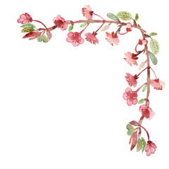 Beautiful watercolor cherry blossom or Sakura in spring. isolated branches and pink flowers on white background.