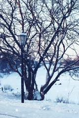 Winter light street and tree