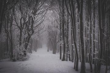 foresta ghiacciata