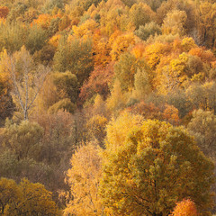 Aluminium Prints Roe autumn sunny forest with beautiful colorful bright tree crowns