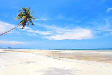 Coconut palm on the beach, Koh Samui Island, Thailand