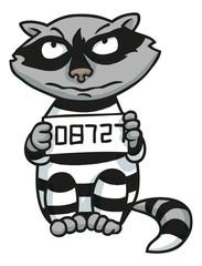 Waschbär im Gefängnis mit Kostüm und Nummer