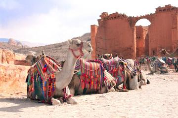 Camels and Qasr Al-Bint, Petra, Jordan