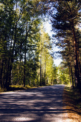 Forest road in autumn time. The sun is shining on the road.
