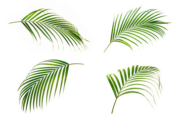 Set of Green leaves of palm isolated on white background.