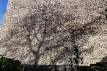 ombre d'un arbre sur mur de pierres blanches
