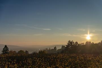 Couché de soleil sur un paysage de campagne en Lorraine devant les vignes en Automne