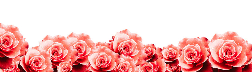 Red roses floral border frame background with wet red pink white roses flowers closeup pattern border design for wedding greeting invitation wide panorama format backdrop.