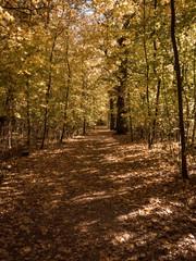 Sonniger Weg im Herbstwald
