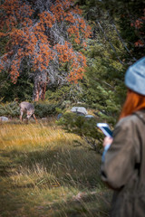 Watching young deers in  Jasper National Park, Alberta, Canada