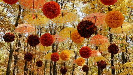Fall .Umbrellas with leaves hanging on a branches in an autumn forest. Autumn season.