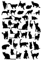 vector, isolated silhouette of cat, collection