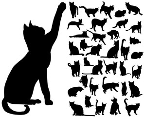 vector isolated silhouette cat set