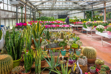 interior of an large greenhouse with blossoming seasonal flowers and plants nursery. Flowers and plants for sale. Trento, northern Italy, Europe