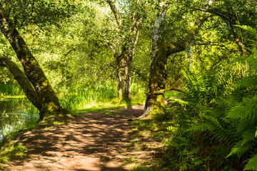 Beautiful path in the forest among trees in Summer time, Monklands Canal, Scotland
