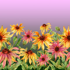 Beautiful echinacea flowers (coneflower) with green leaves on gradient background. Seamless floral pattern. Watercolor painting. Hand painted illustration.