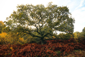 Woodbury Common in Devon