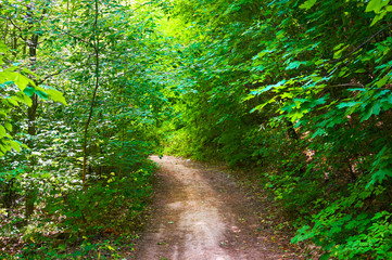 Footpath in the green forest. Forest conservation area. Natural Park.