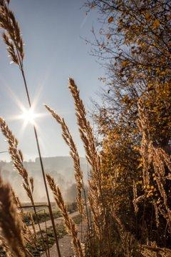 Herbstgräser in der Morgensonne
