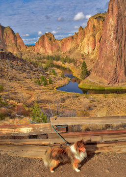 Hiking with a sheltie at Smith Rock State Park in Oregon