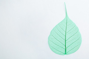 Beautiful decorative skeleton leaf and space for text on white background