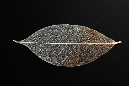 Beautiful decorative skeleton leaf on black background, top view
