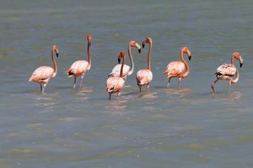 Flamingi na jeziorze