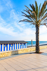 Palm tree on coastal promenade in Marbella town at sunset time, Andalusia, Spain