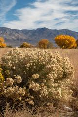 fall foliage yellow leaves on trees in Eastern Sierra landscape
