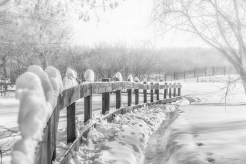 Wooden hedge and path in snowdrifts, black-white photography