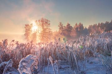 Winter nature landscape. Frosty scene in morning sunlight. January.