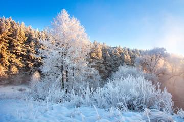 Beautiful winter morning landscape in sunlight