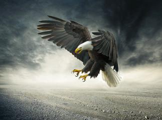 Adler im Sturm Fototapete