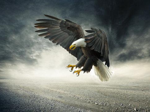 Adler im Sturm