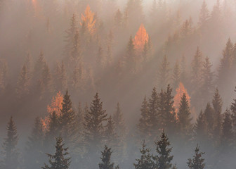 sunrays shining on a foggy colorful forest in autumn